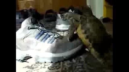 Костенурка прави секс с обувка