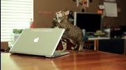 Котето със силата на джедай ..
