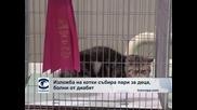 Изложба на котки събира пари за деца болни от диабет