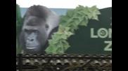 Започна ежегодното преброяване на животните в Лондонския зоопарк