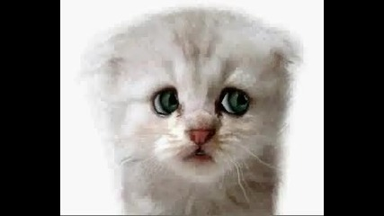 Omg Talking Cat .. л0л - w0w