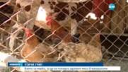 Внимание, птичи грип! Има ли опасност за здравето ни?