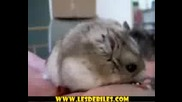 Zabavno - Hamster Si Hapva Fysty4e