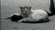 Коте не иска да пусне своят умрял приятел!