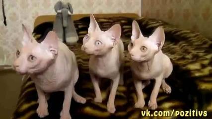 Тези трите си имат диригент