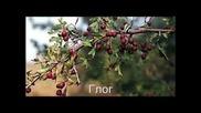Енциклопедия За Растения И Билки