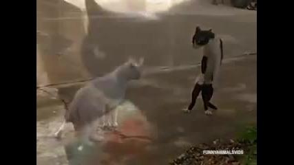 Ядосани котки-смях