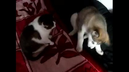 Коте и маламутче
