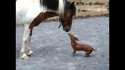 Пони и дакелче си играят