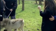 Aimee Kelly Meets Real Life Wolves
