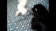 Черно Куче И Бяло Коте - Крис И Пек