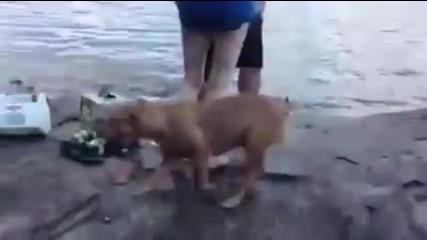 Ето защо кучето е най-добрия приятел на човека !
