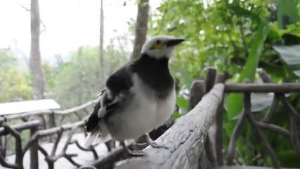 Птичка говори на странен език