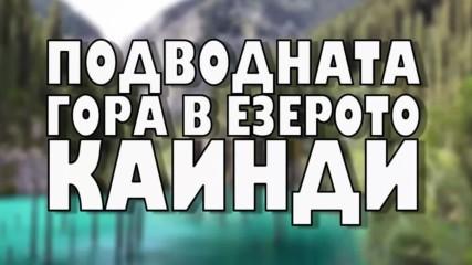 Подводната гора в езерото Каинди