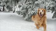 Шаро и първия сняг Детски песнички