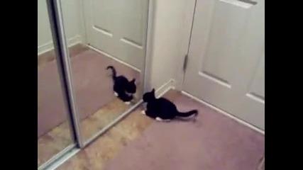 Котка се бие с огледалото! ;dd