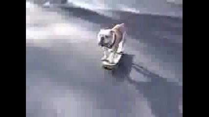 Много Смешна Компилация От Кучета