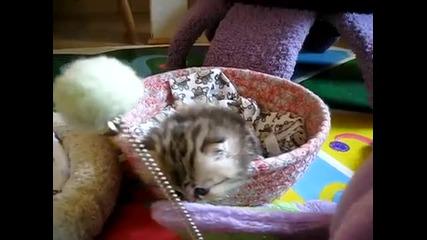 Най-сладкото коте