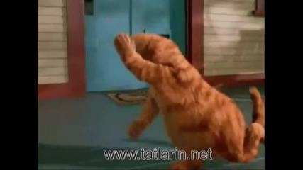 Sibel Can Kiskivrak 2011 Komik Garfield