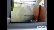 Коте наднича през прозорец