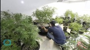 Italian Army Begins Cannabis Farm to Combat High Foreign Price