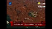 Микроби чистят Мексиканския залив