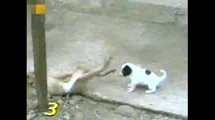 Маймуна И Куче