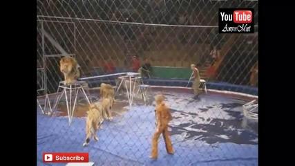Топ 10 Инциденти От Цирка