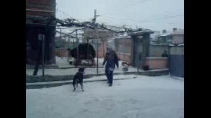 Ротвайлер си играе в сняг