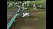 Кози Се Правят На Умрели