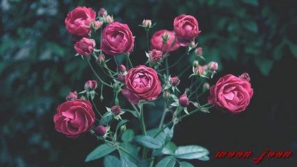 • Бг превод • Fujita Maiko - Nee