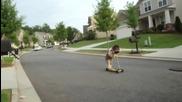 Куче кара тротинетка Невероятно !!!!