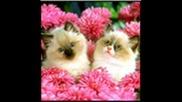 Много Сладки Котета