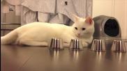 Коте изумява с бдителността си ...