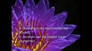 Обичам те в лилаво... - kadife