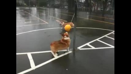 кучета си играят с балон