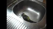 Розелата ми се къпе - част 3