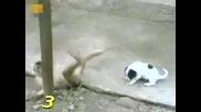 Маймуна се смее на куче след като му вижда оная работа хах :)