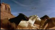 Divlje Jagode - Konji