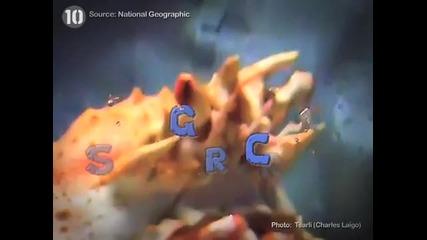 10 странни морски създания