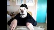 Куче-човек си похапва