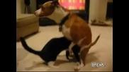 Котка прави свирчоци на куче
