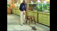 Ферма за змии в Тайван се превърна в популярна туристическа дестинация