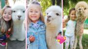 Малката Алис и алпаката Балу: историята на едно необикновено приятелство!