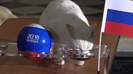 Russia or Egypt? SEE Achilles the cat's World Cup predictions