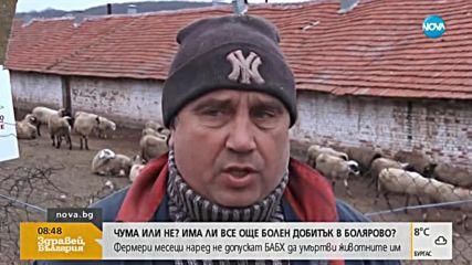 Има ли все още болен добитък в Болярово?