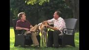 Puppy Training Video 05 - Find a Breeder