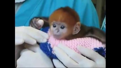 Малка маймунка , много сладка