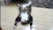 Котето Мару е изморено
