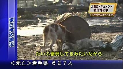 Японско куче спаси приятеля си от смърт